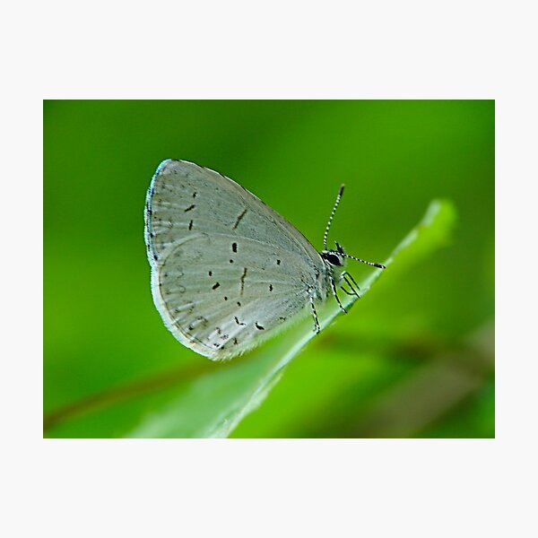Tiny Butterfly Photographic Print