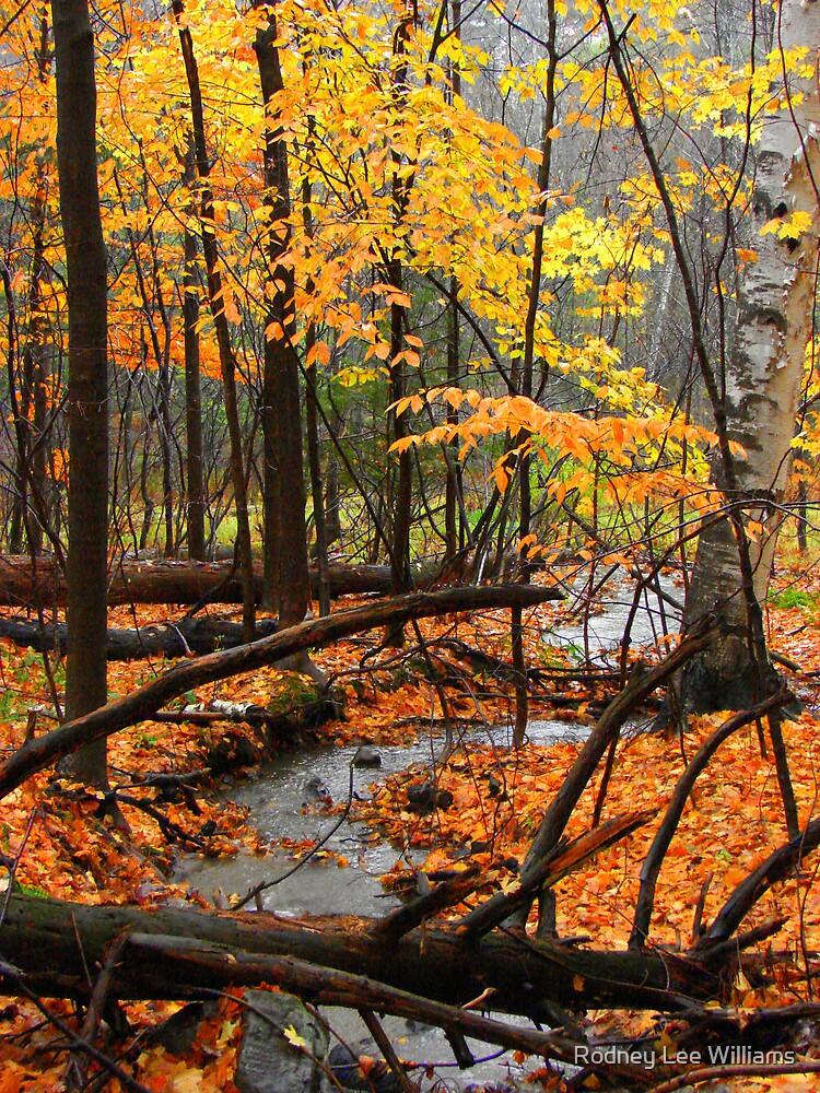 Autumn creek in rain by Rodney Lee Williams