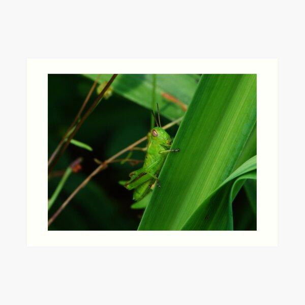 Green Grasshopper Art Print
