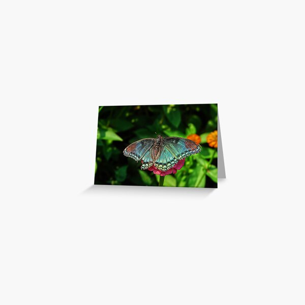 Battle Scarred Butterfly Greeting Card
