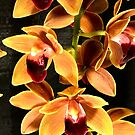 Cascading Orchids by FortuitousPhoto
