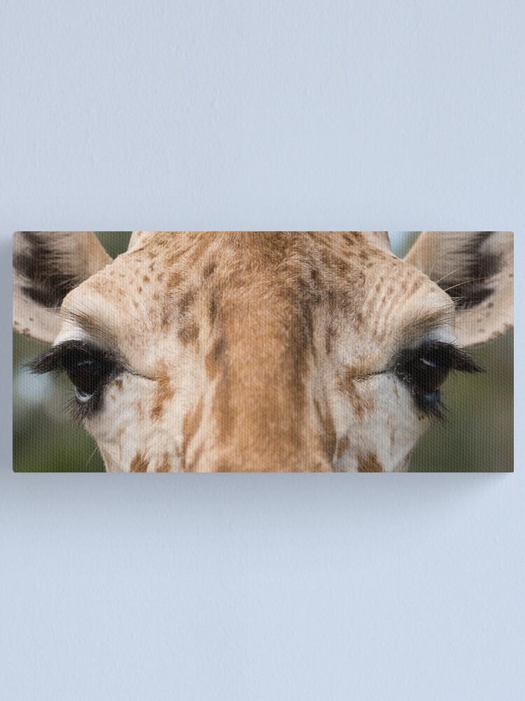 Alternate view of Giraffe Stare Canvas Print