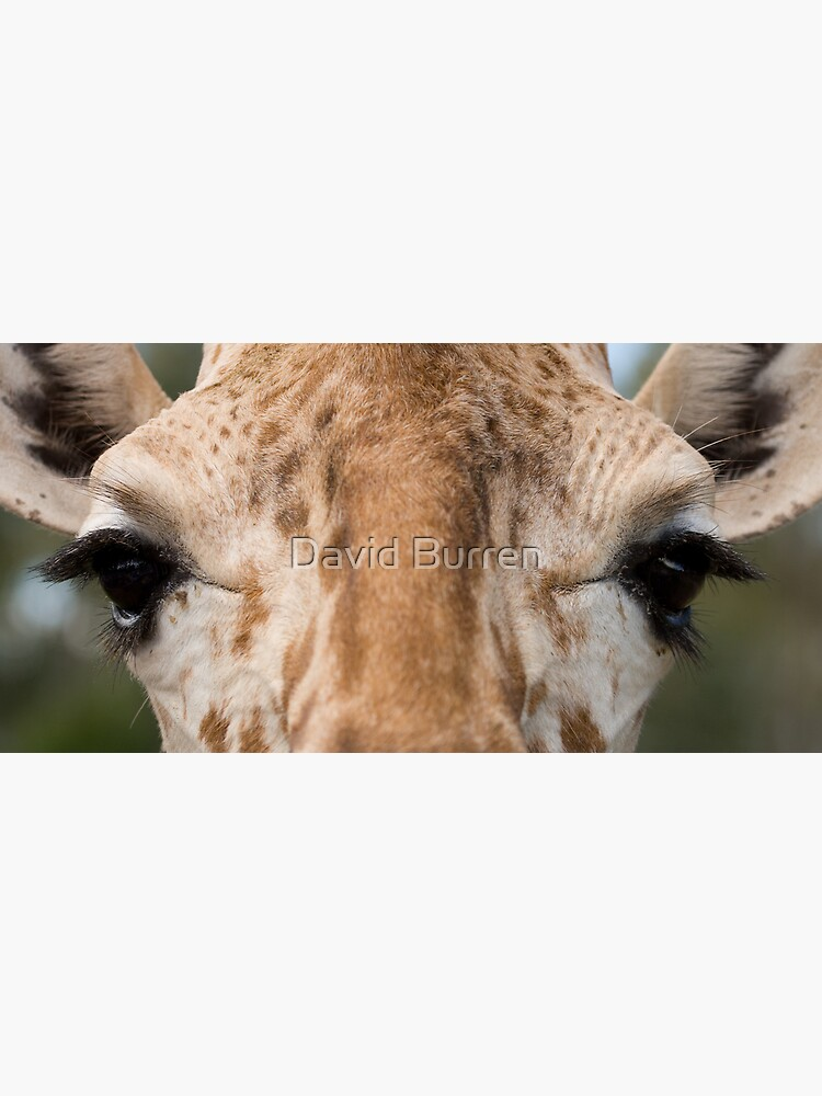 Giraffe Stare by DavidBurren