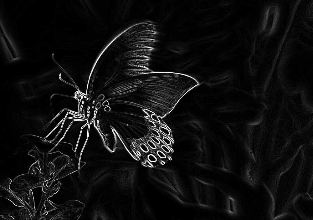 Butterfly by febriany