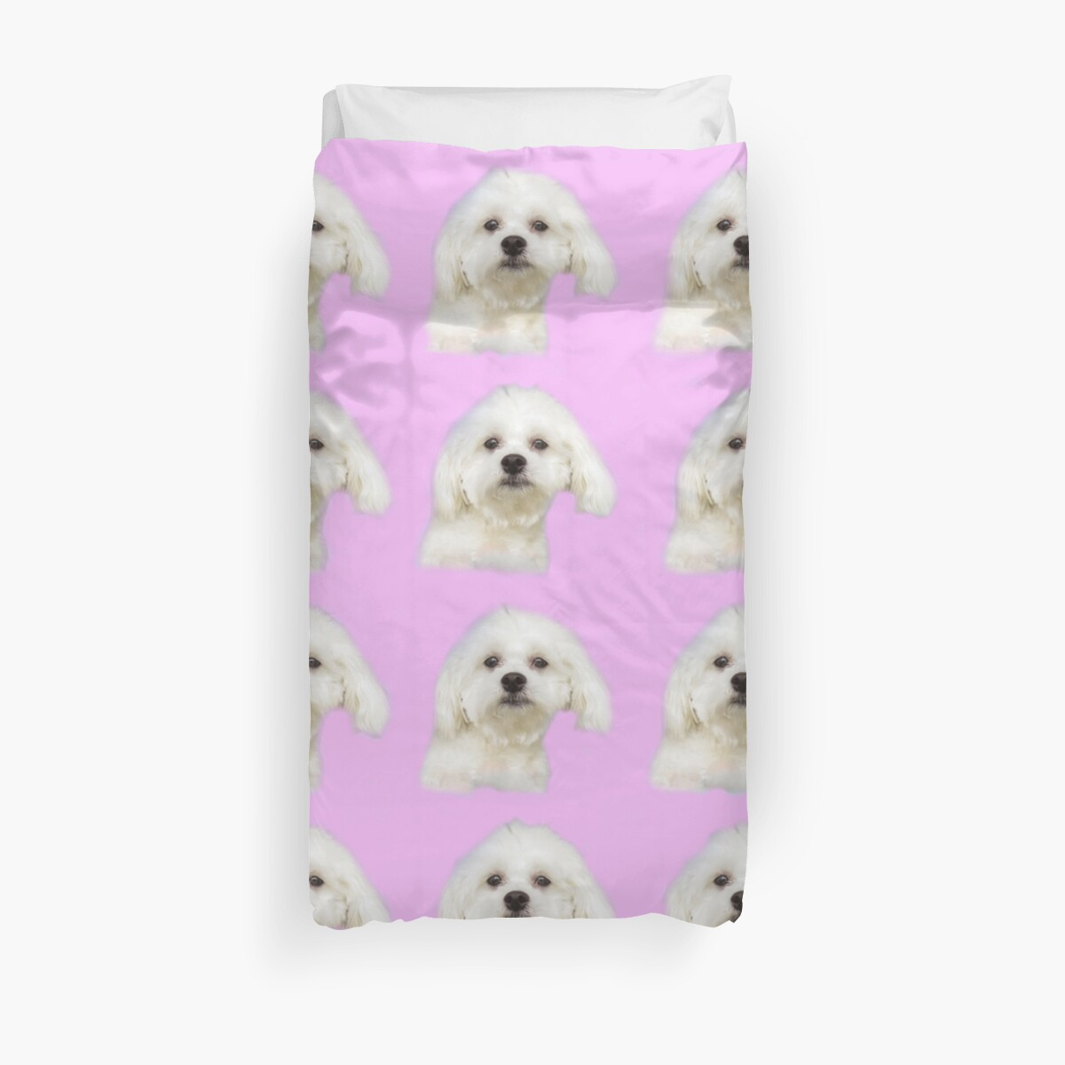 Maltese puppy on pink by Zina Stromberg