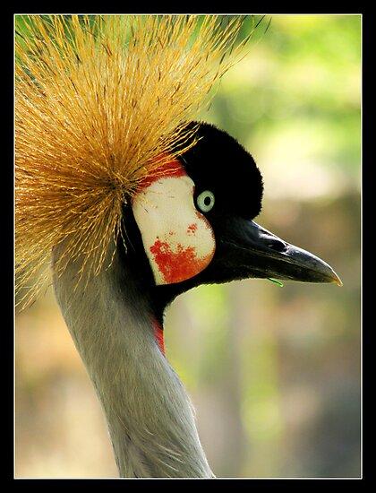 suspicious gray crowned crane by chen cohen