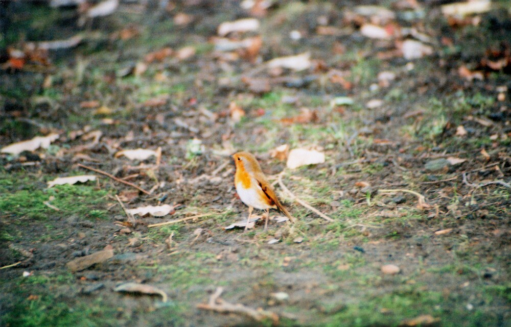 Robin On The Prowl by Nathan Walker