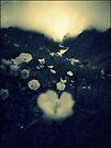 Slovakia mountain flowers by schizomania