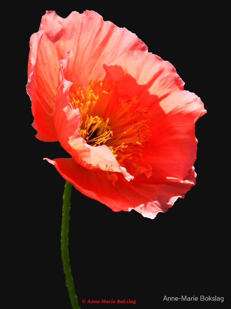 Poppy by amb1946