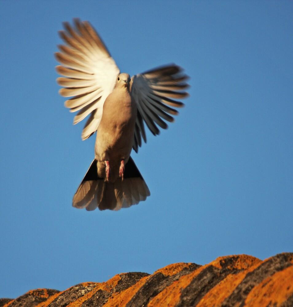 Landing by LMarinho