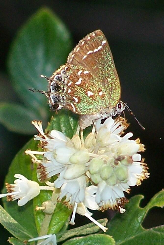 Butterfly Beauty by Opal Westmoreland