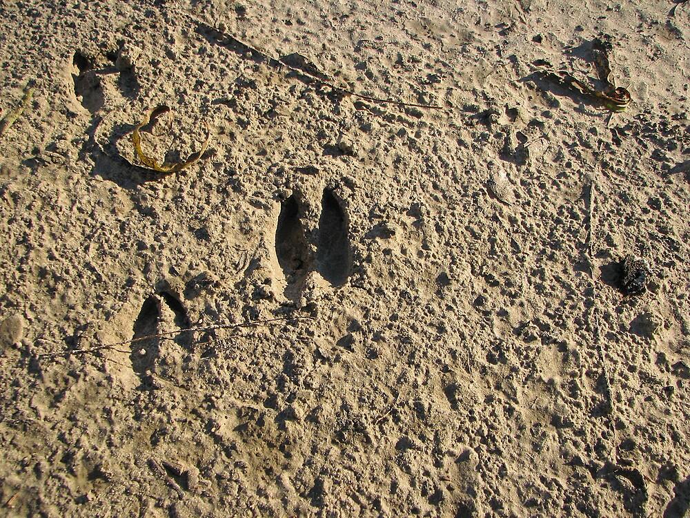 Footprints by DottieDees
