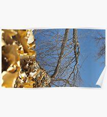 Blue Skies 011 Poster
