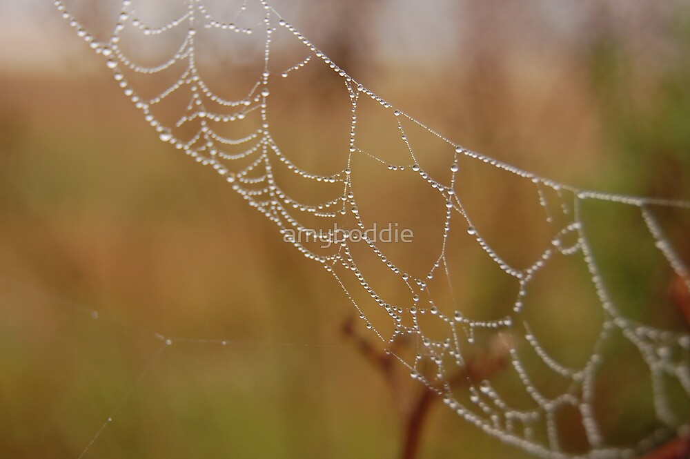 Morning Lace by amyboddie