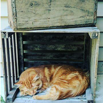 Sleeping Cat by Black-kat