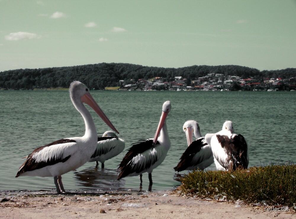 Pelican Clan by reflector