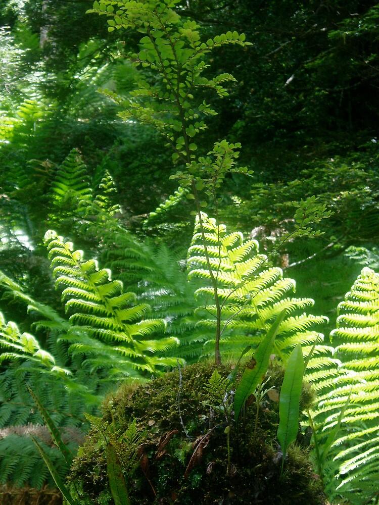 Ferns by chaylastorm