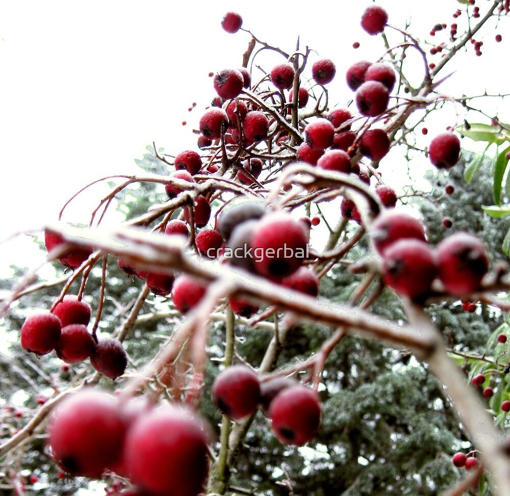 Winter berry tree by crackgerbal