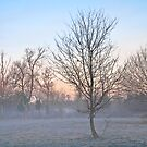 Winter by Isard