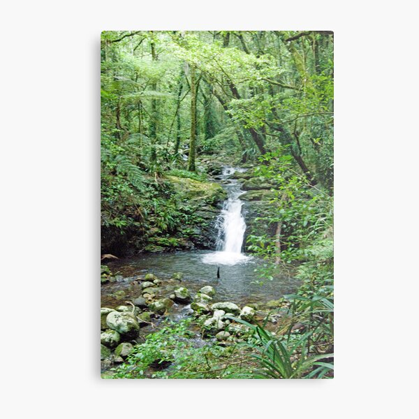 Rainforest Stream, Lamington National Park, Queensland, Australia Metal Print