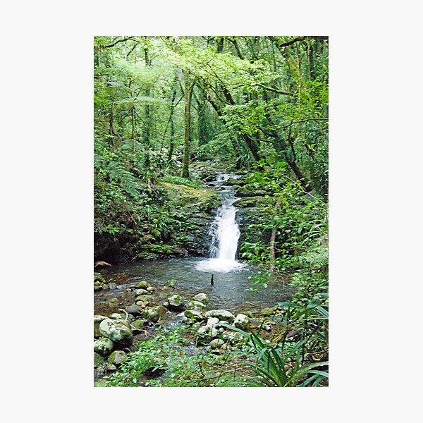 Rainforest Stream, Lamington National Park, Queensland, Australia Photographic Print
