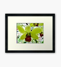 Chartreuse and Wine Framed Print