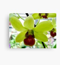 Chartreuse and Wine Canvas Print