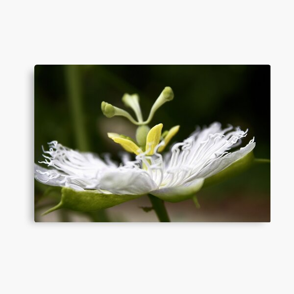 Flower of Passion Canvas Print
