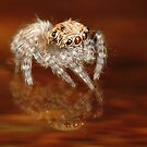 Baby Jumper by Darren Post