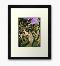 Speckled Bird - Beauty in form and color Framed Print
