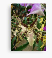Speckled Bird - Beauty in form and color Canvas Print
