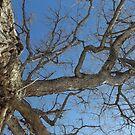 Blue Skies 025 by dge357