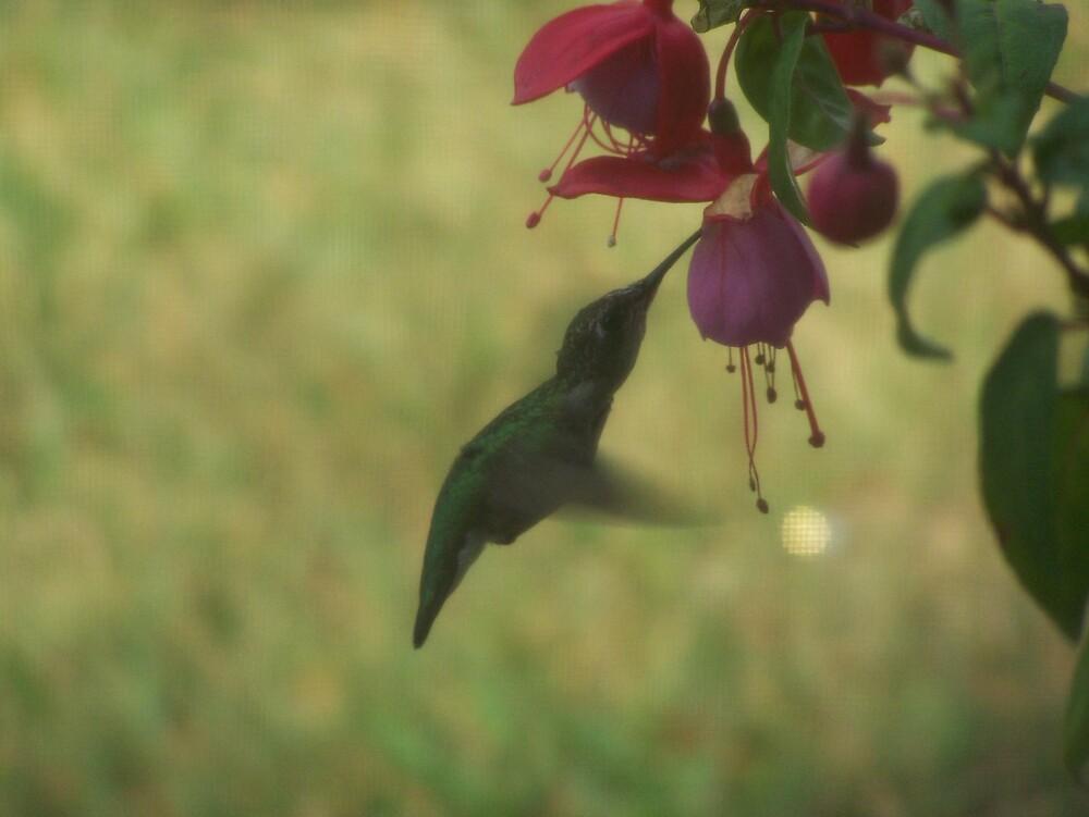 Hummingbird by SunflowerAnnie