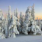 « Snowy Trees » par Päivi  Valkonen