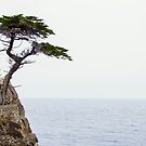 The Lone Cypress of Pebble Beach by ImageryD