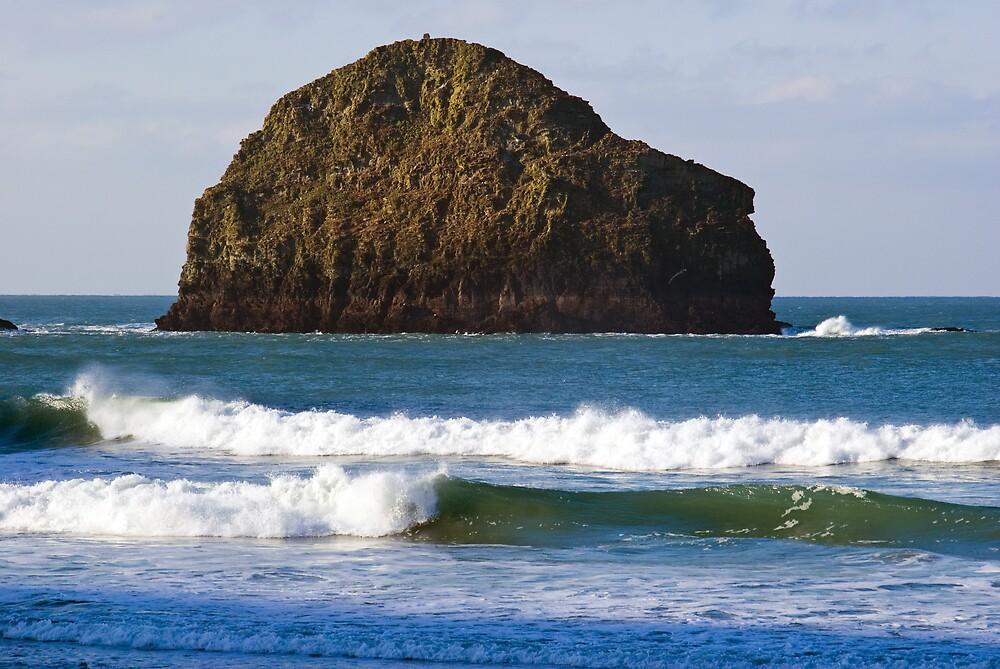 Gull Rock by David Wilkins