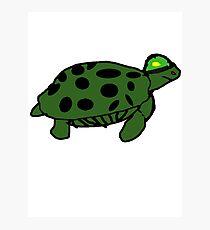 Army turtle Photographic Print