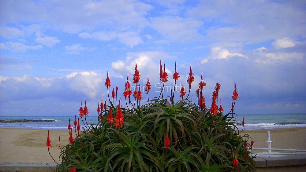 """ Love in Bloom."" by John  Smith"