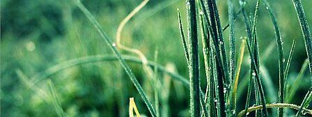 Frozen grass by Alexandra Zimmer