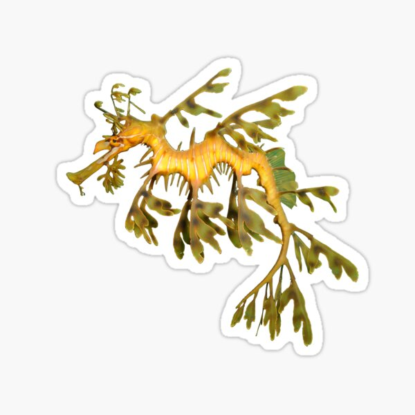 Leafy Seadragon Ocean Sea Dragon Seahorse beautiful sea creature Sticker