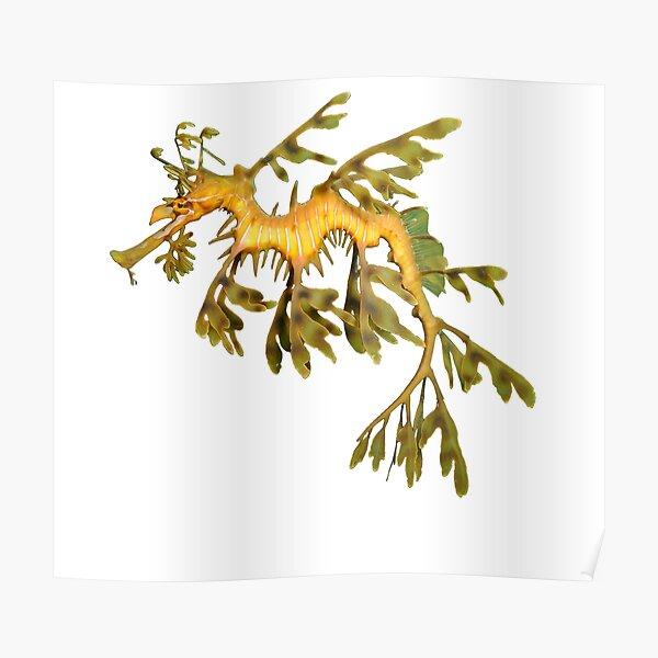 Leafy Seadragon Ocean Sea Dragon Seahorse beautiful sea creature Poster