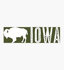 Bison: Iowa Photographic Print