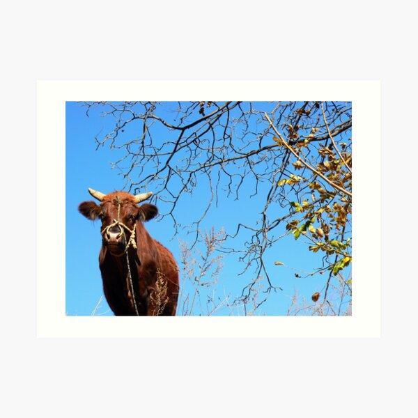 Chinese cow Art Print
