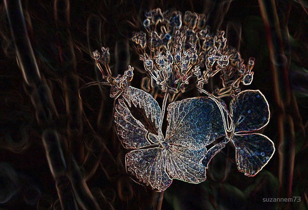 Winter Hydrangea by suzannem73