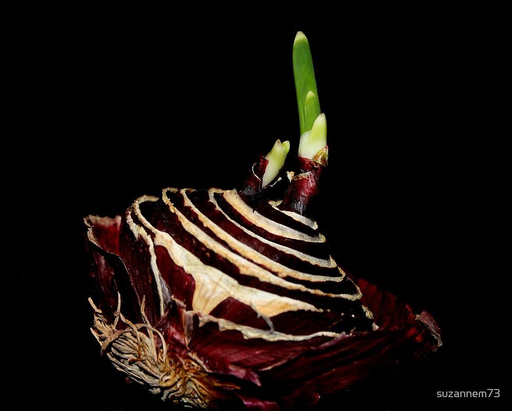 Forgotten Onion by suzannem73