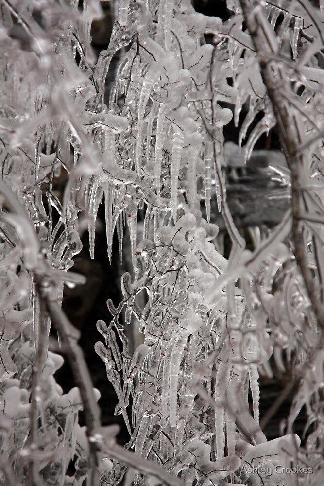 Icicles by Ashley Crookes