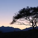 The lonely tree and the sunset, Fujairah, UAE by mojgan