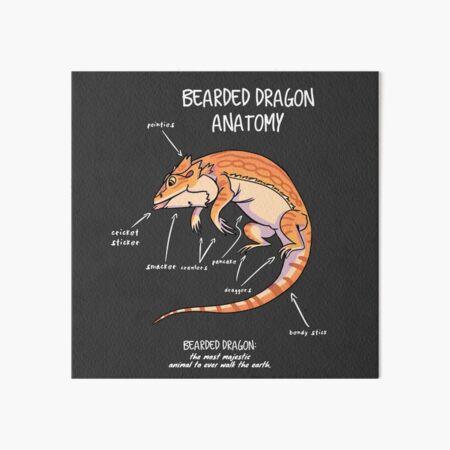 bearded dragon anatomy Art Board Print