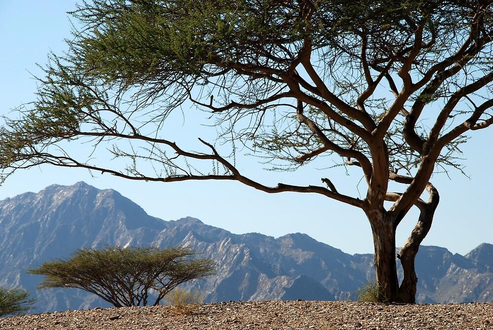 Desert trees, Fujairah, UAE by mojgan