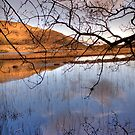 Killarney National Park - 'Watery Meadow' by Peter Sweeney